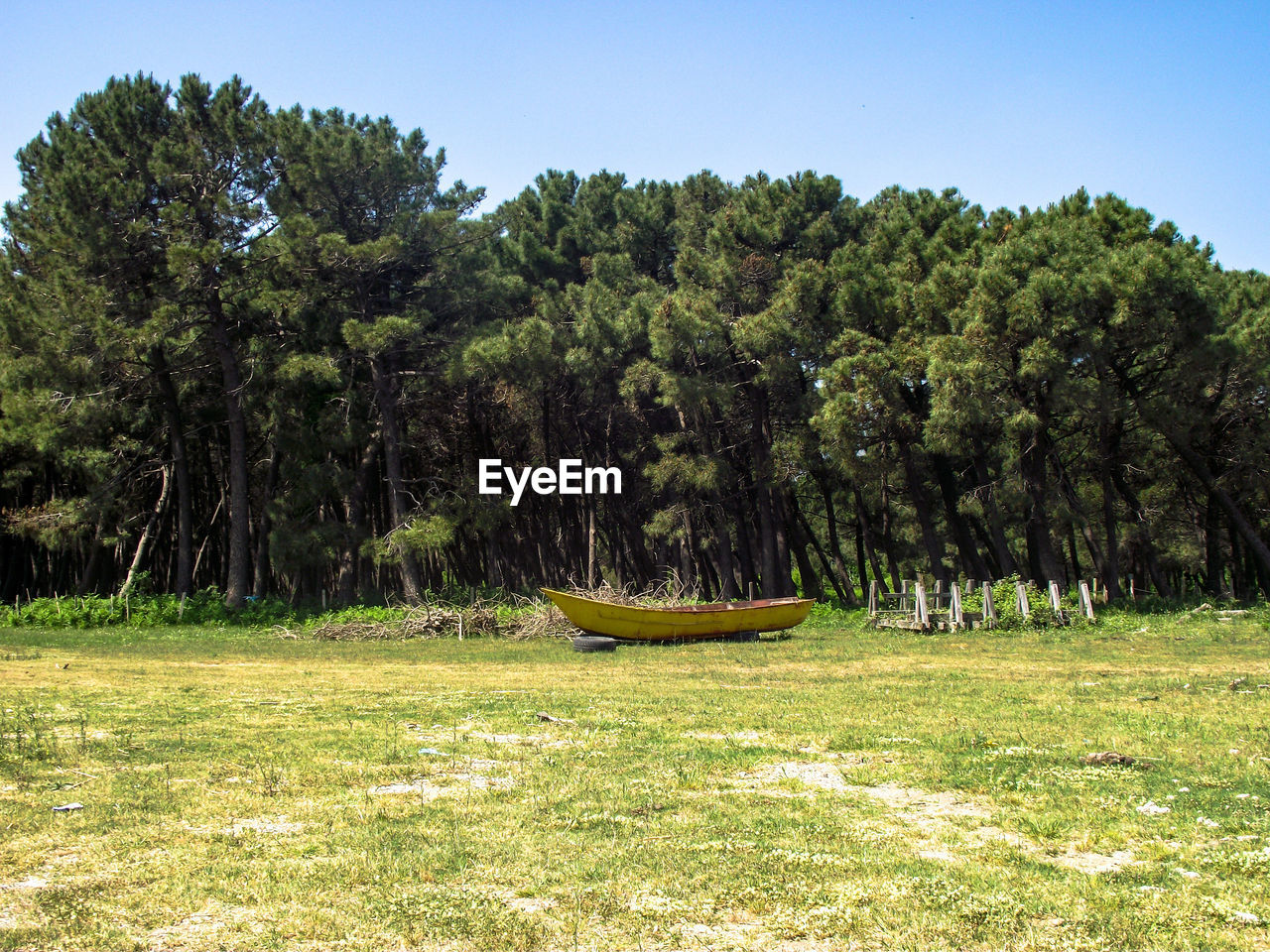 plant, tree, day, land, nature, grass, sky, growth, beauty in nature, field, green color, tranquility, nautical vessel, tranquil scene, no people, non-urban scene, outdoors, sunlight, scenics - nature, clear sky, rowboat