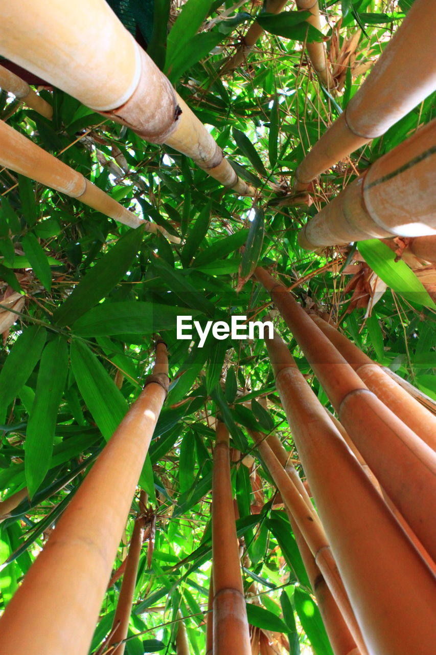human hand, human body part, unrecognizable person, real people, bamboo - plant, day, outdoors, one person, close-up, nature, people