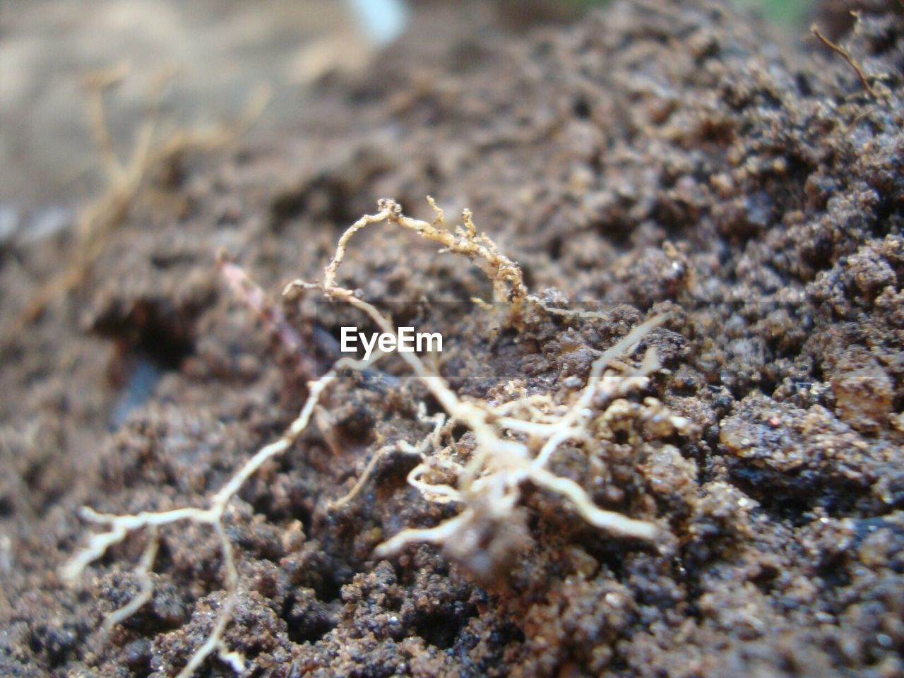 Close-Up Of Root On Field