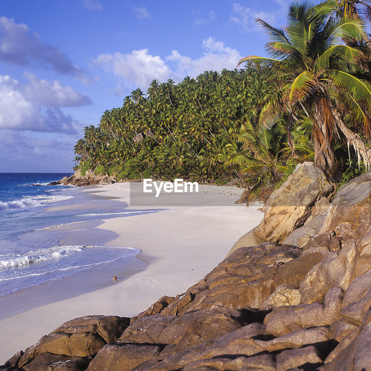sea, water, beach, sky, land, beauty in nature, cloud - sky, tree, plant, tropical climate, rock, tranquility, scenics - nature, tranquil scene, nature, palm tree, rock - object, solid, growth, no people, horizon over water, outdoors