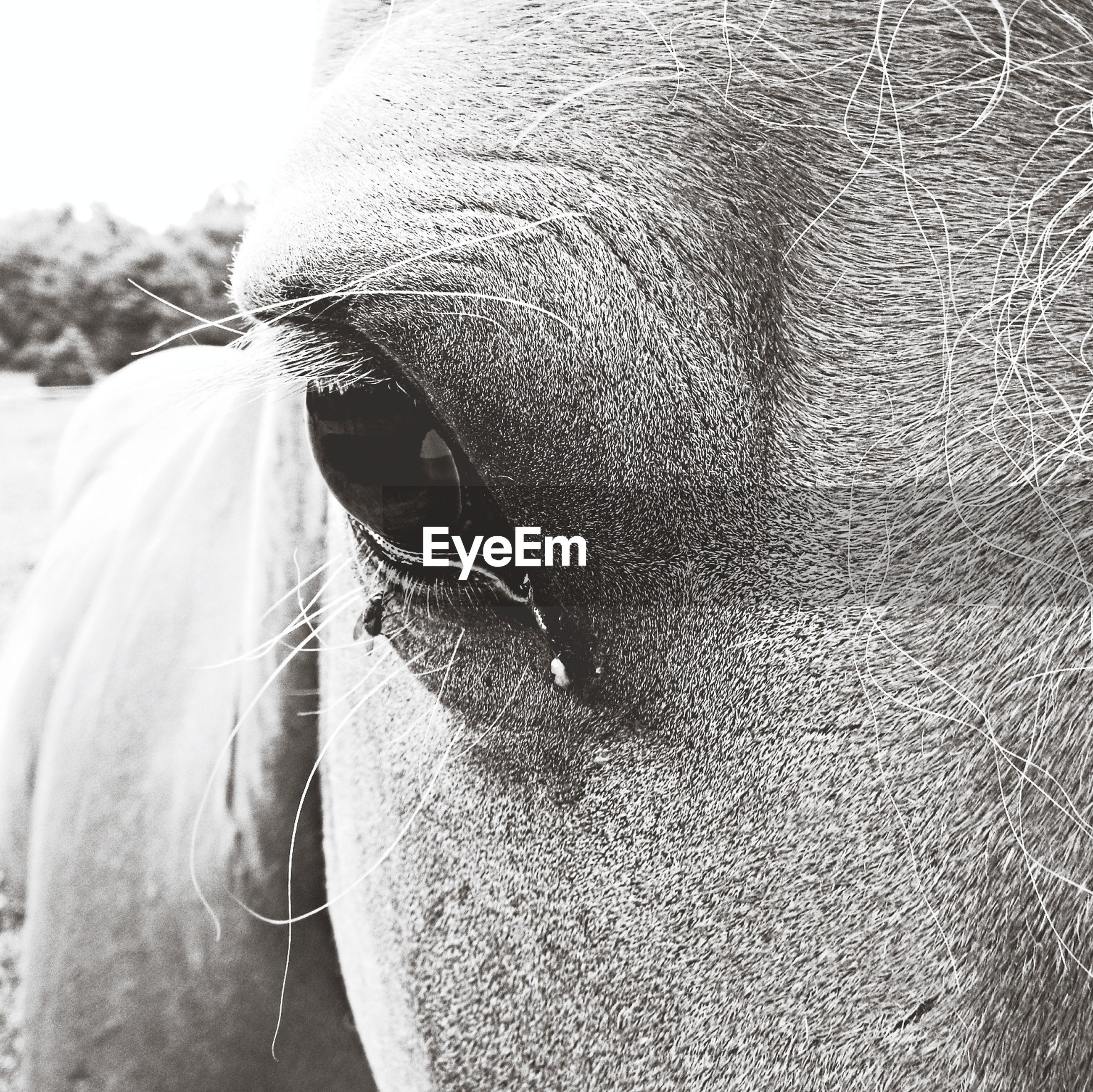 Close-up portrait of horse outdoors