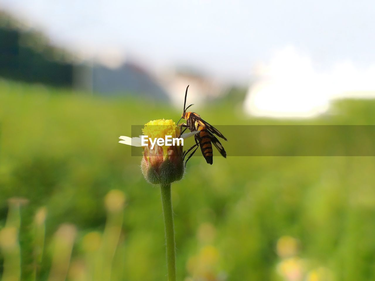 invertebrate, insect, animal, animal themes, animal wildlife, animals in the wild, plant, one animal, beauty in nature, close-up, flower, nature, growth, focus on foreground, green color, flowering plant, selective focus, day, fragility, animal wing, no people, outdoors, pollination, flower head