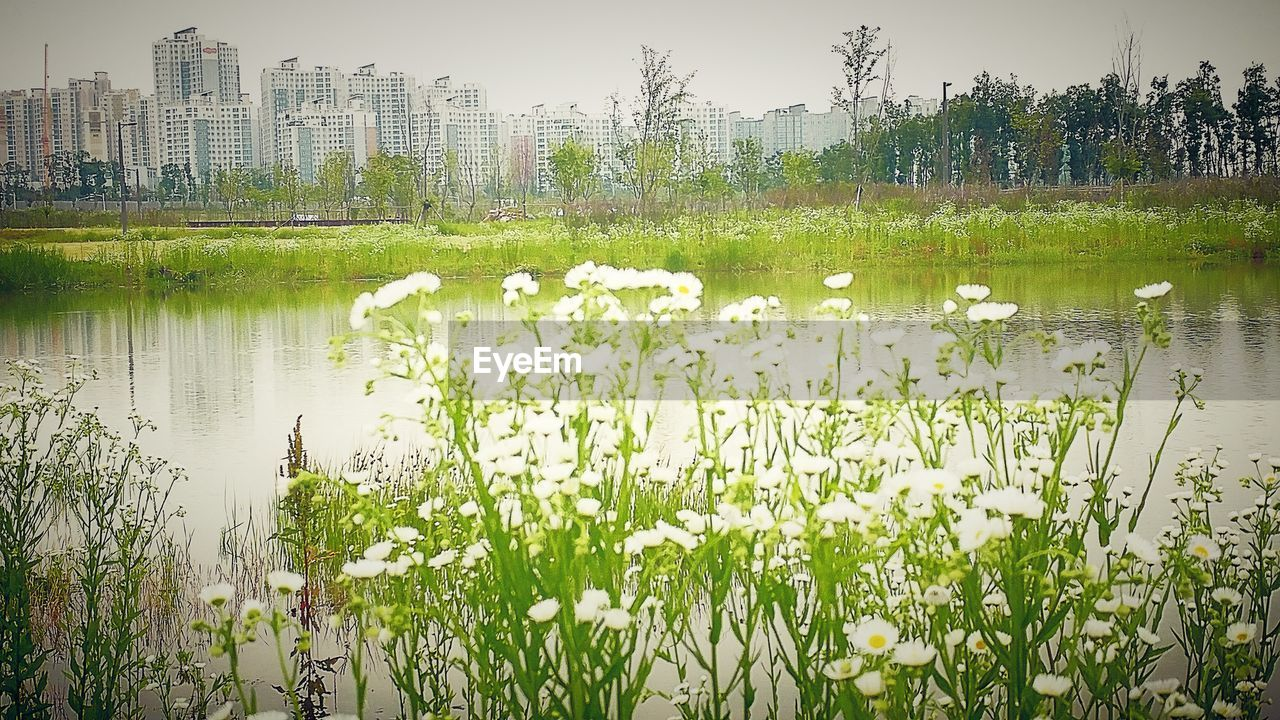 growth, water, plant, nature, lake, flower, beauty in nature, green color, building exterior, outdoors, no people, day, reflection, grass, built structure, architecture, leaf, tree, freshness, scenics, city, sky