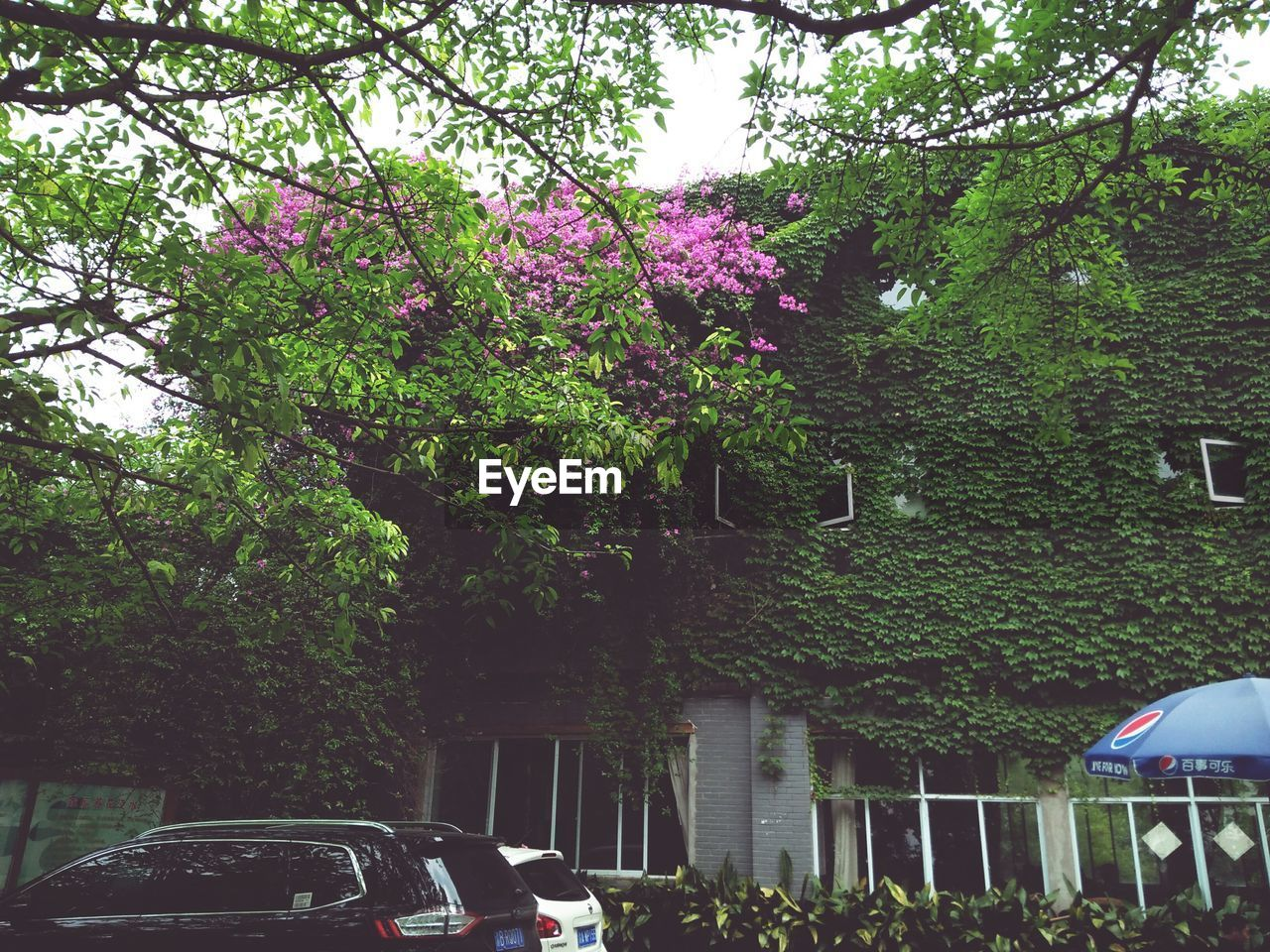 tree, car, growth, outdoors, nature, land vehicle, day, transportation, real people, green color, men, branch, beauty in nature, women, built structure, flower, building exterior, architecture, people