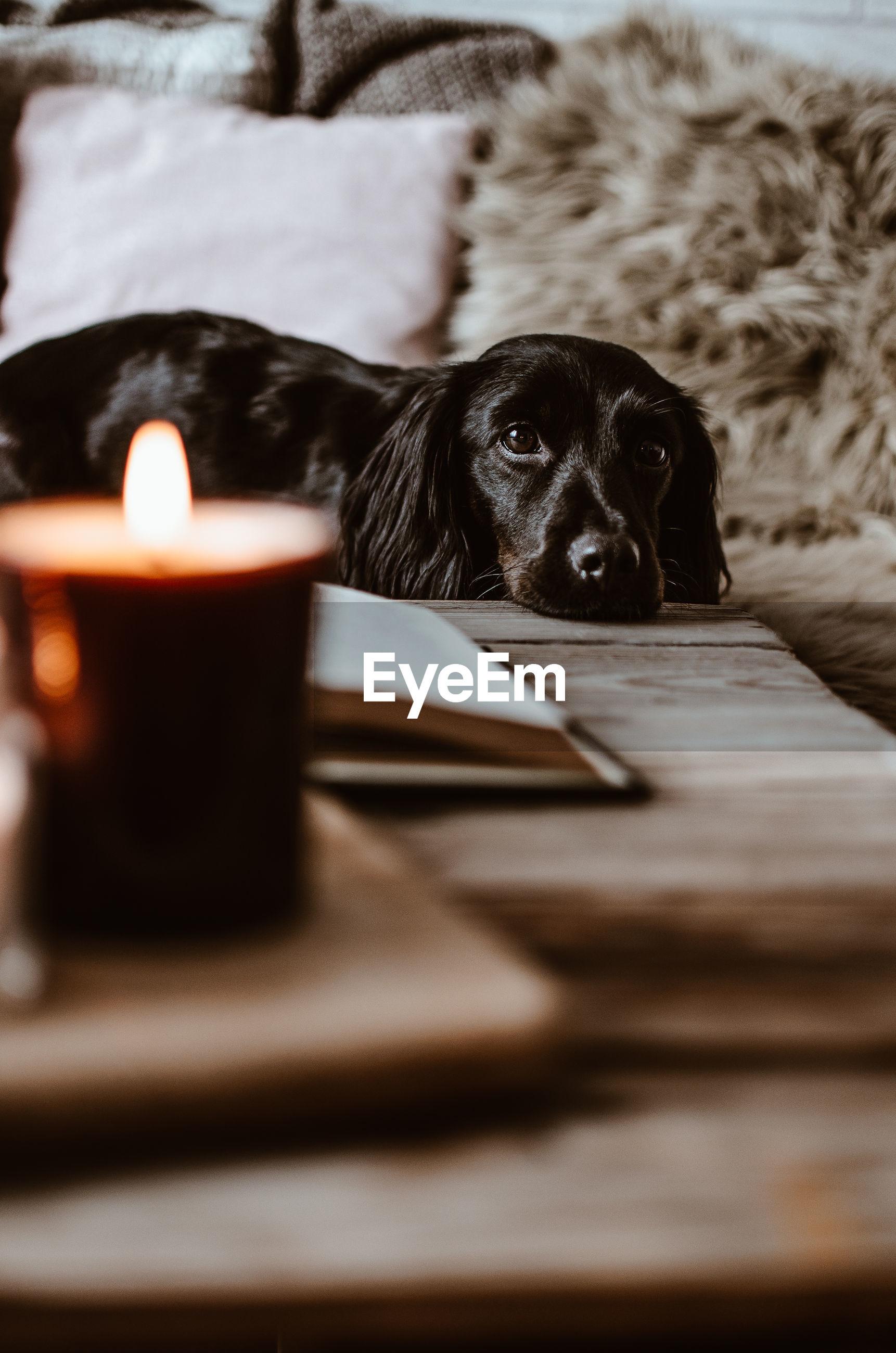Close-up portrait of dog resting against illuminated candle
