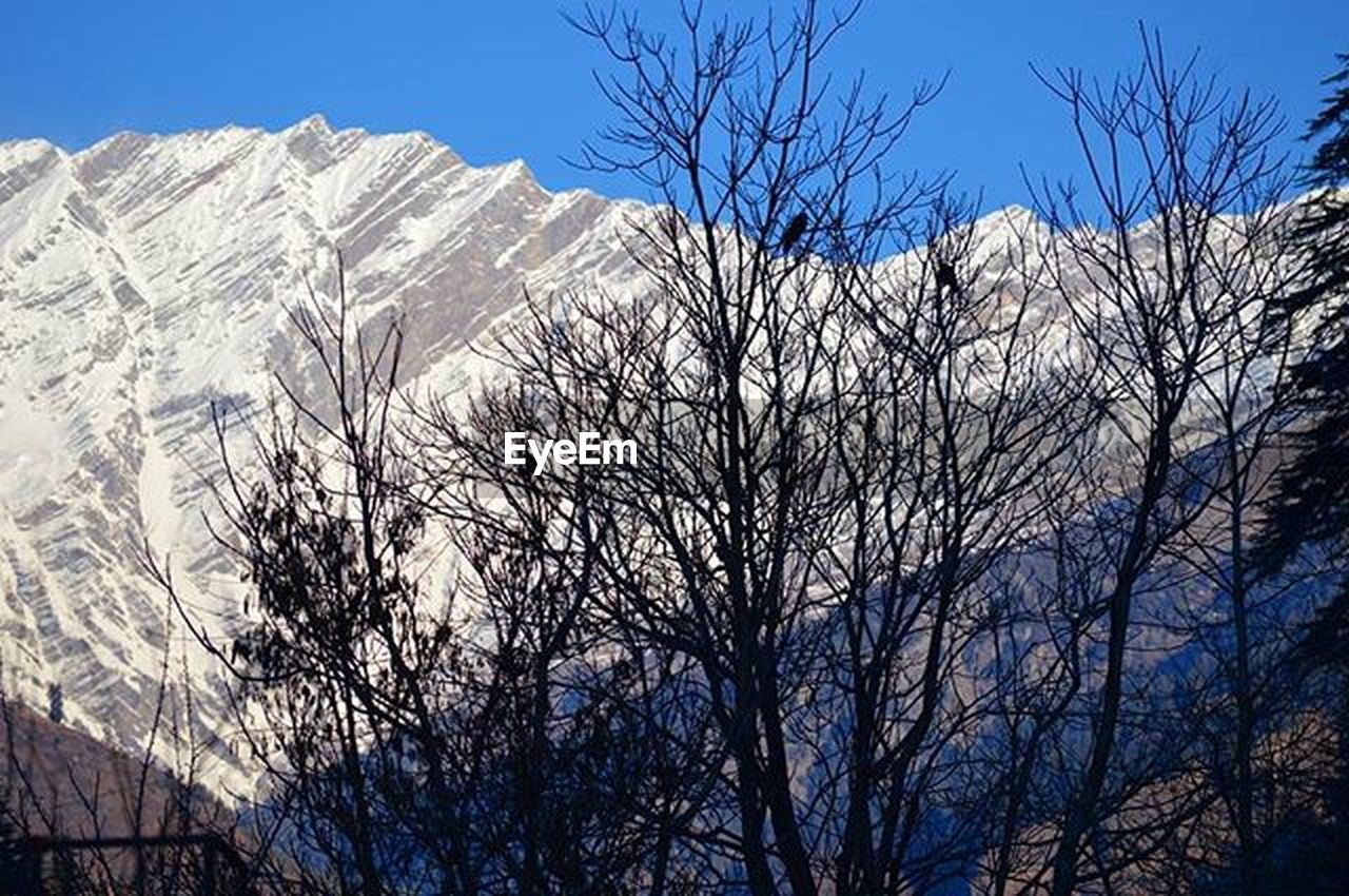bare tree, tree, branch, low angle view, blue, sky, mountain, clear sky, sunlight, nature, outdoors, day, tranquility, no people, scenics, beauty in nature