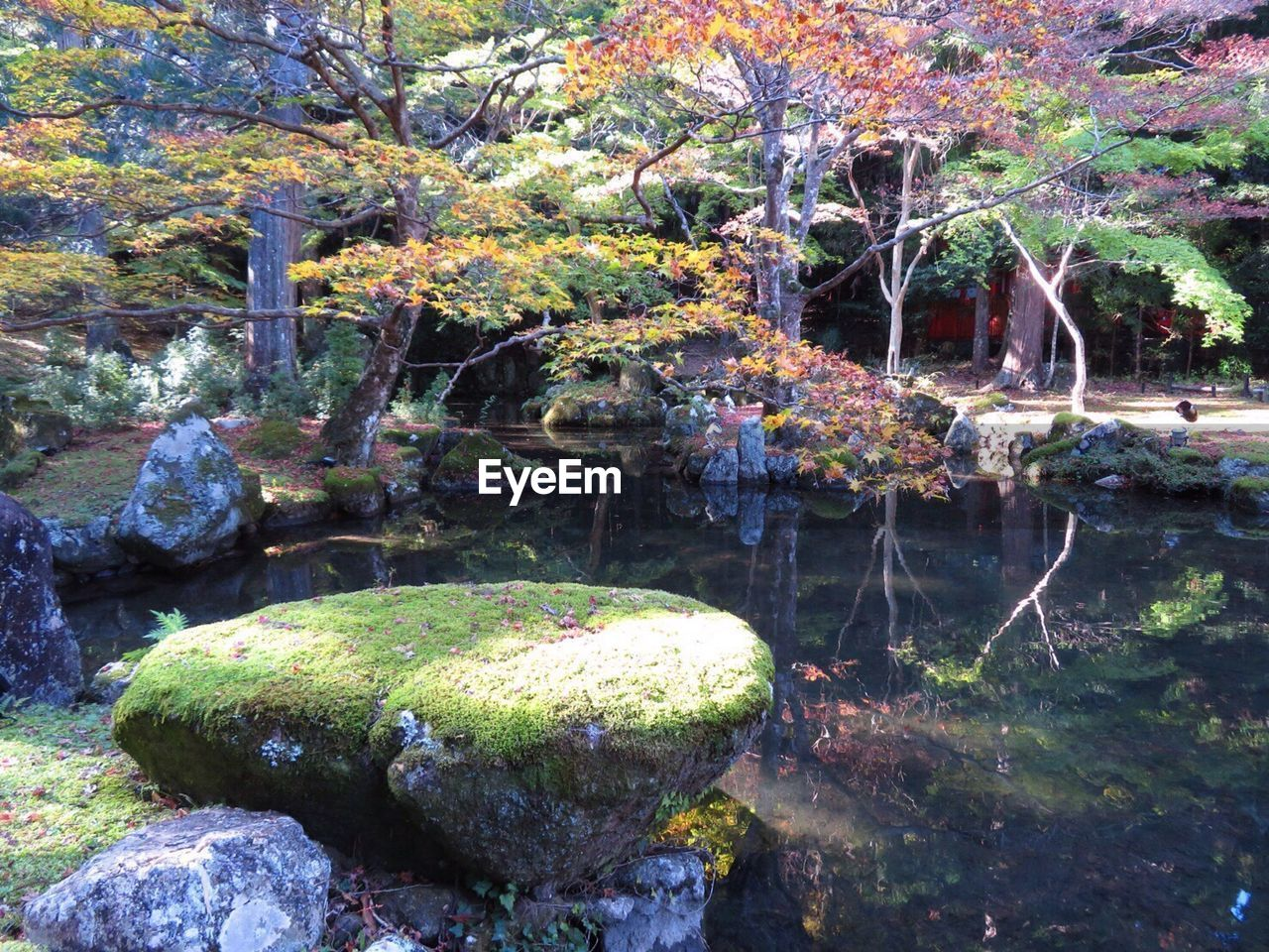 rock - object, water, tree, no people, nature, day, outdoors, moss, tranquility, growth, beauty in nature, plant, autumn, leaf, freshness