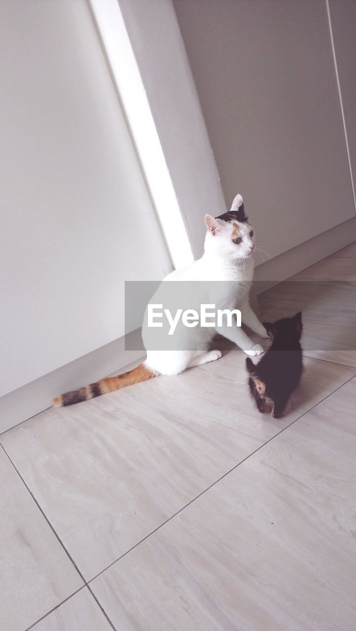 domestic, pets, domestic animals, mammal, cat, domestic cat, feline, one animal, vertebrate, flooring, indoors, sitting, white color, high angle view, no people, home interior, looking, tiled floor