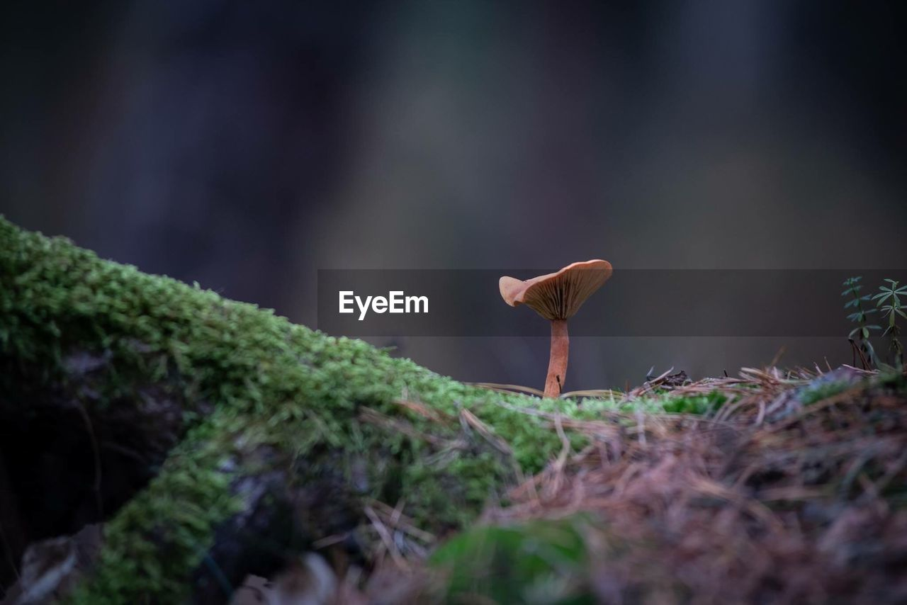 selective focus, plant, growth, land, day, nature, mushroom, fungus, one animal, no people, green color, animal, forest, field, beauty in nature, outdoors, vertebrate, close-up, animal themes, vegetable, toadstool, surface level