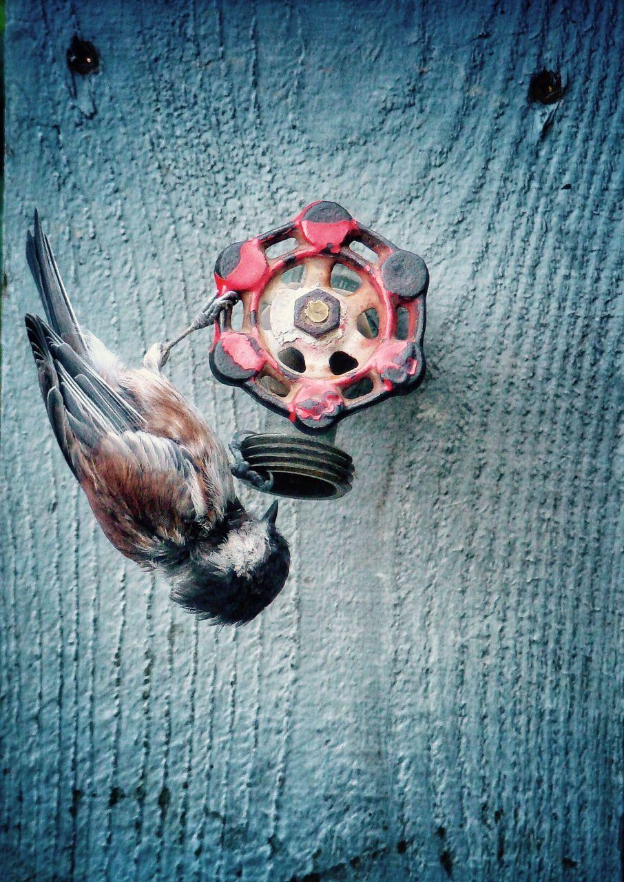 Bird perching on fire hydrant