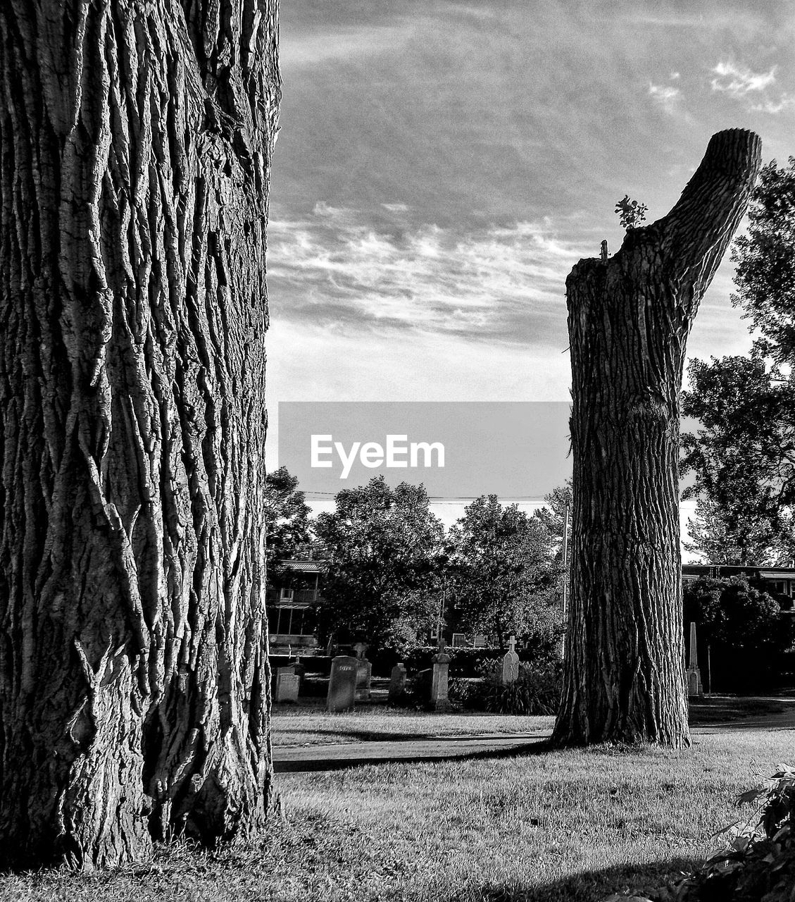 tree, sky, day, tree trunk, cloud - sky, outdoors, no people, built structure, architecture, grass, nature, building exterior