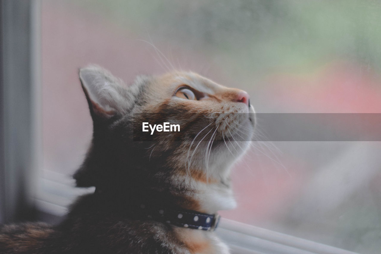 one animal, pets, domestic, animal themes, domestic animals, mammal, animal, domestic cat, cat, feline, looking, focus on foreground, window, whisker, vertebrate, close-up, no people, glass - material, looking away, animal body part, animal head