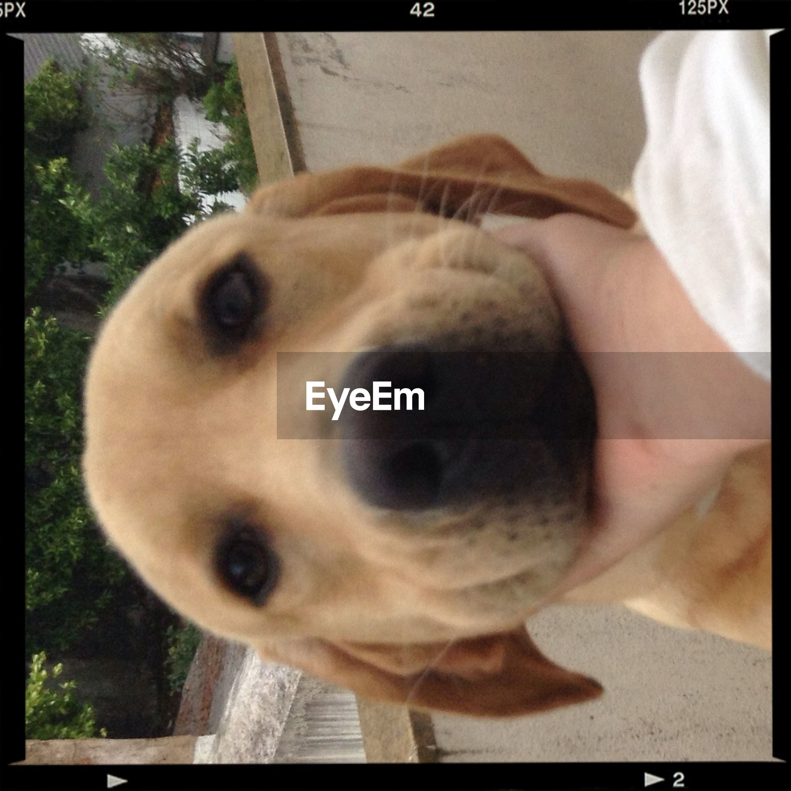 transfer print, auto post production filter, dog, one animal, pets, animal themes, domestic animals, portrait, looking at camera, close-up, lifestyles, mammal, leisure activity, animal head, person, focus on foreground, part of