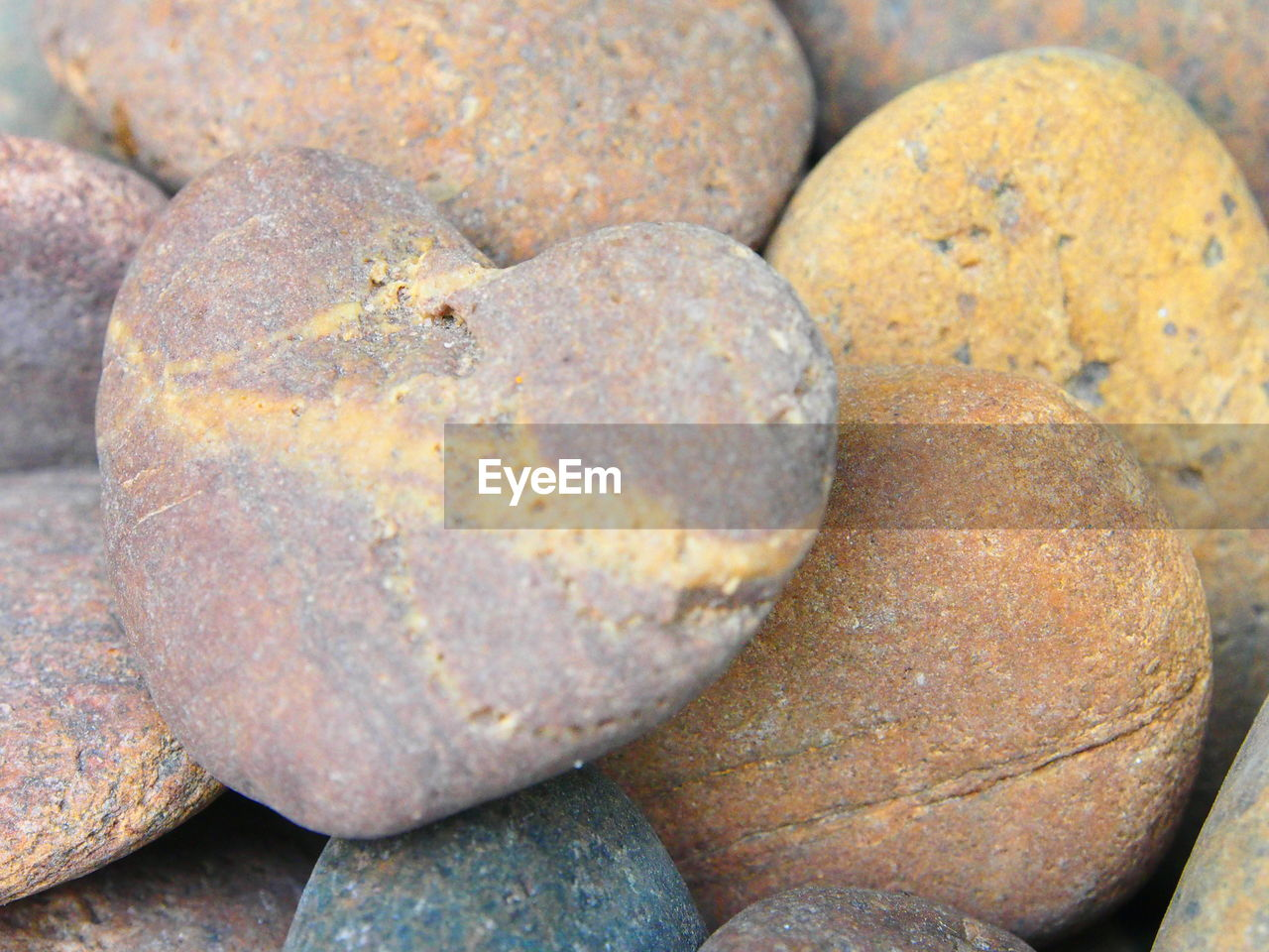 rock - object, pebble, no people, close-up, day, nature, sea life, outdoors, fragility, animal themes
