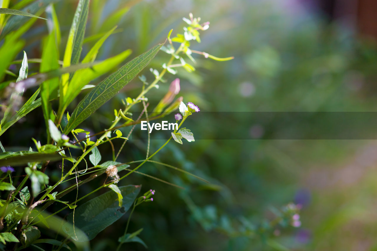 plant, growth, green color, beauty in nature, close-up, selective focus, day, nature, plant part, no people, focus on foreground, leaf, freshness, outdoors, tranquility, fragility, vulnerability, water, sunlight