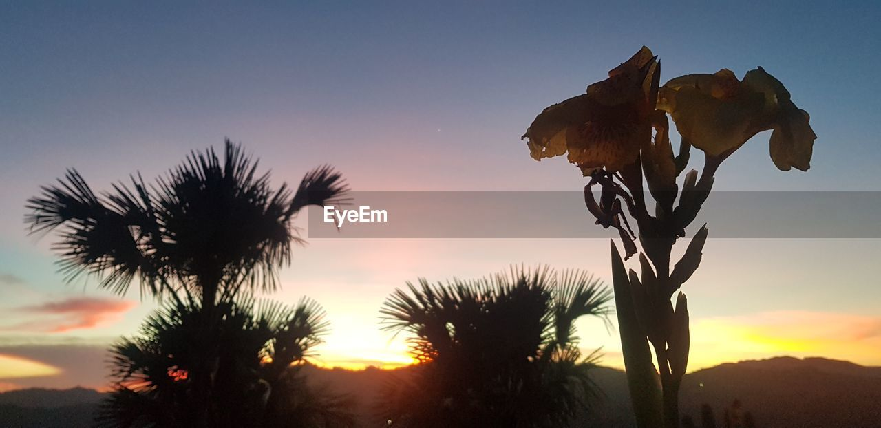 sky, sunset, plant, beauty in nature, nature, growth, no people, tranquility, tranquil scene, scenics - nature, sunlight, silhouette, focus on foreground, orange color, vulnerability, land, tree, fragility, flower, outdoors, flower head