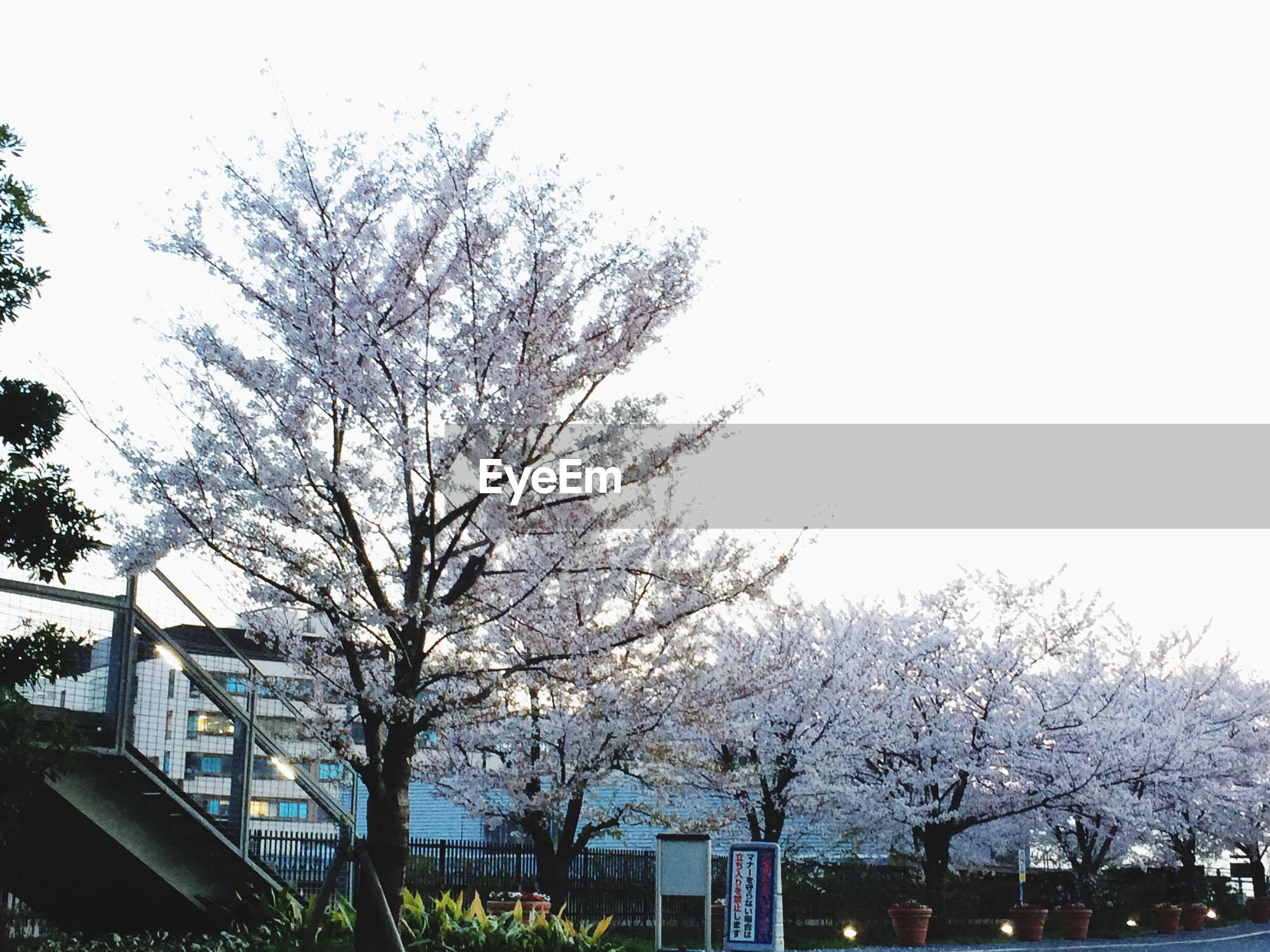 tree, building exterior, bare tree, architecture, built structure, clear sky, branch, low angle view, city, growth, building, day, sky, outdoors, house, residential building, residential structure, copy space, nature, no people