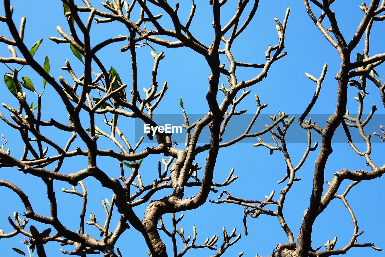 Full frame shot of bare tree against sky