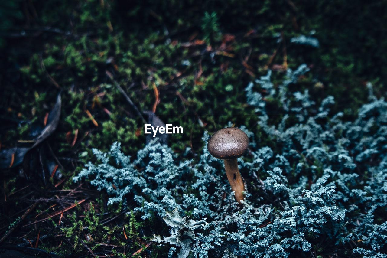 High Angle View Of Mushroom Amidst Plants