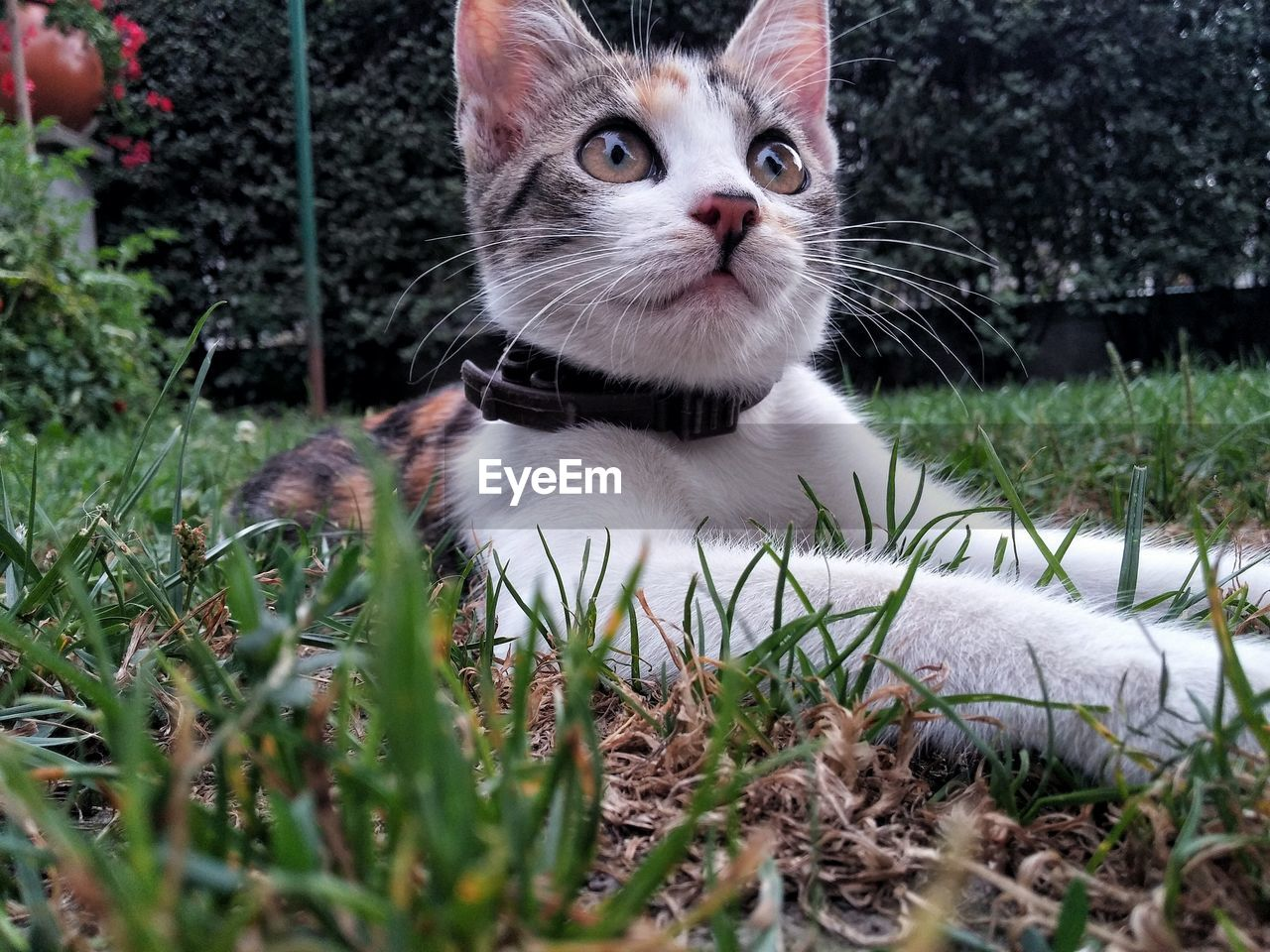 domestic cat, pets, domestic animals, animal themes, one animal, grass, mammal, looking at camera, feline, no people, sitting, portrait, outdoors, day, nature, close-up
