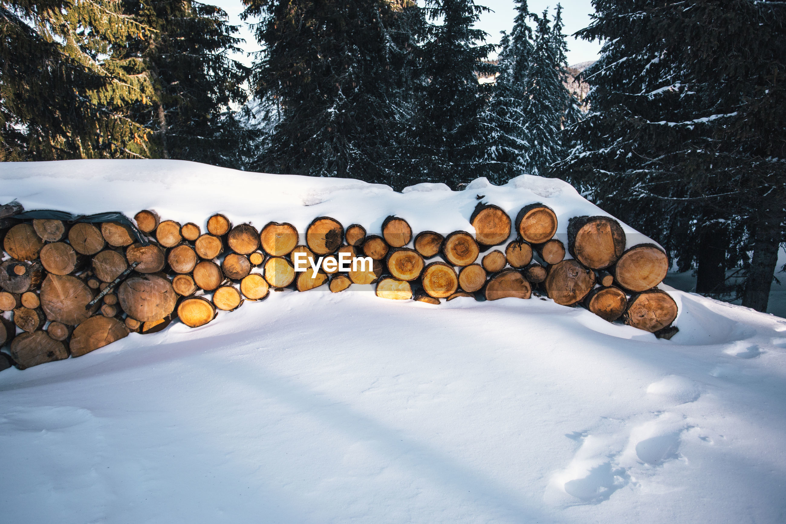 Snow covered stack of logs against trees in forest