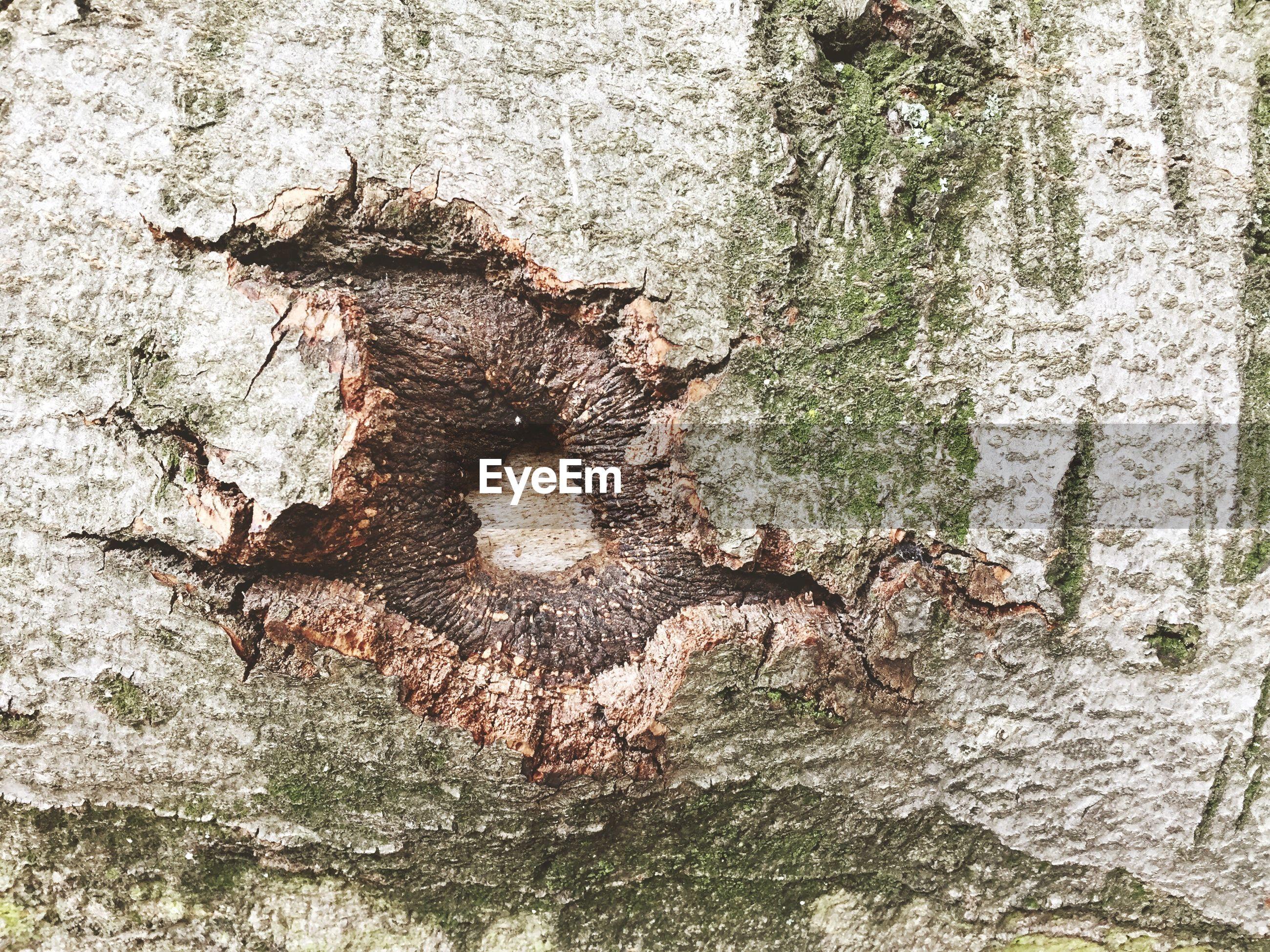 Full frame of tree branch