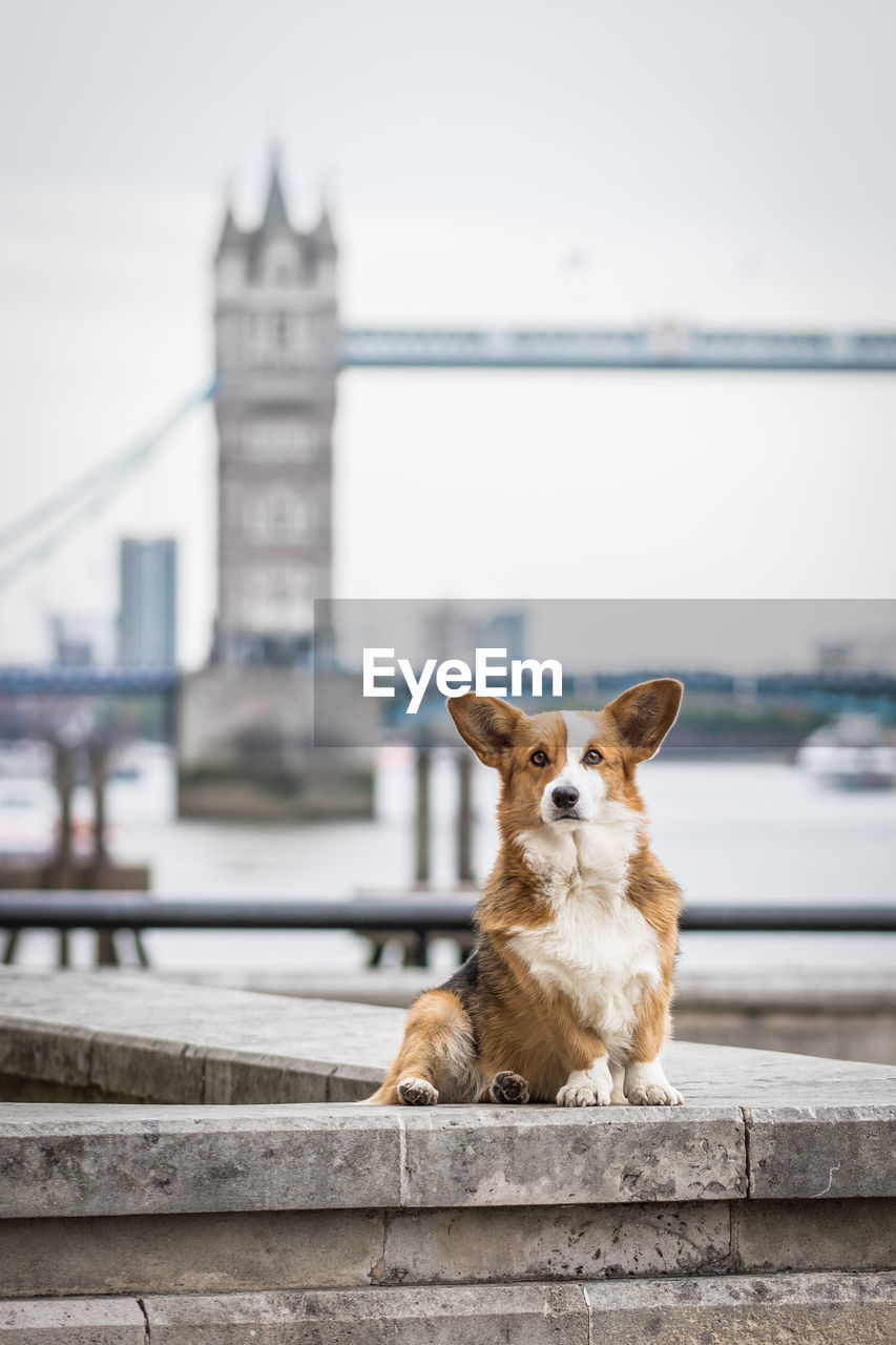 Portrait Of Dog On Retaining Wall Against Tower Bridge