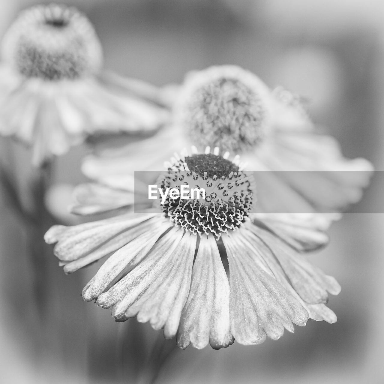 flower, flowering plant, freshness, close-up, plant, fragility, vulnerability, beauty in nature, inflorescence, growth, flower head, petal, no people, focus on foreground, nature, selective focus, pollen, day, outdoors
