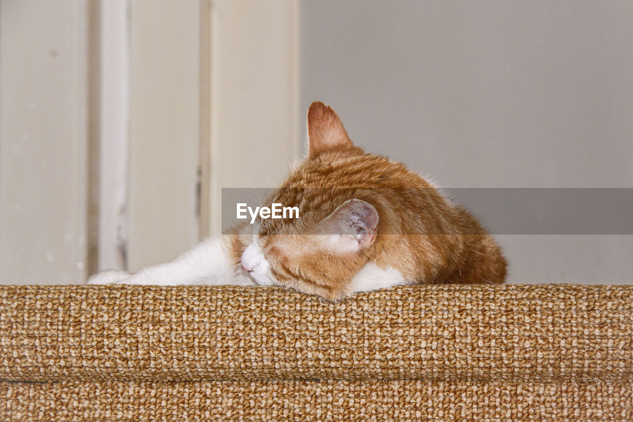 Close-up of cat sleeping on pet bed
