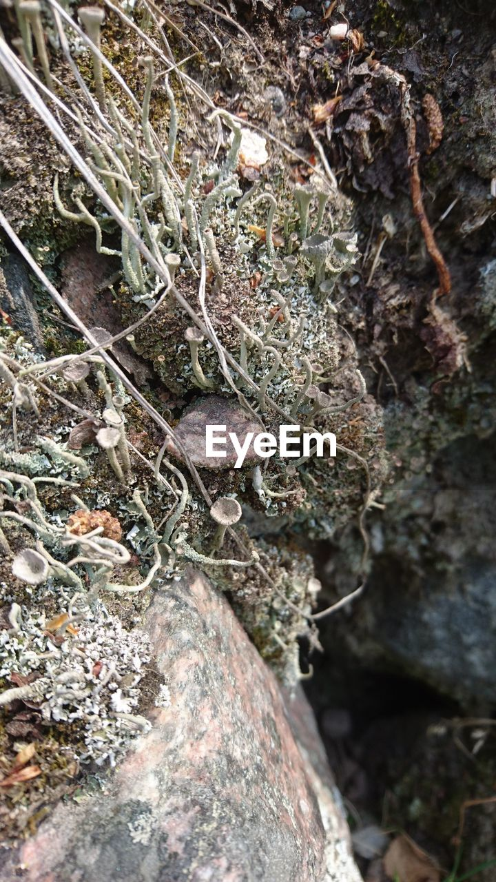 plant, tree, close-up, nature, day, moss, no people, growth, tree trunk, trunk, selective focus, outdoors, beauty in nature, textured, high angle view, lichen, land, focus on foreground, forest, branch, dead plant, bark