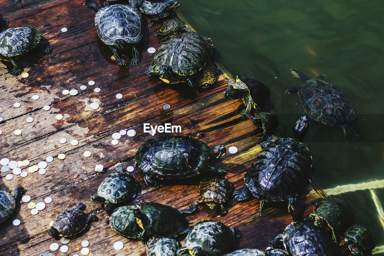 Close-Up High Angle View Of Turtles