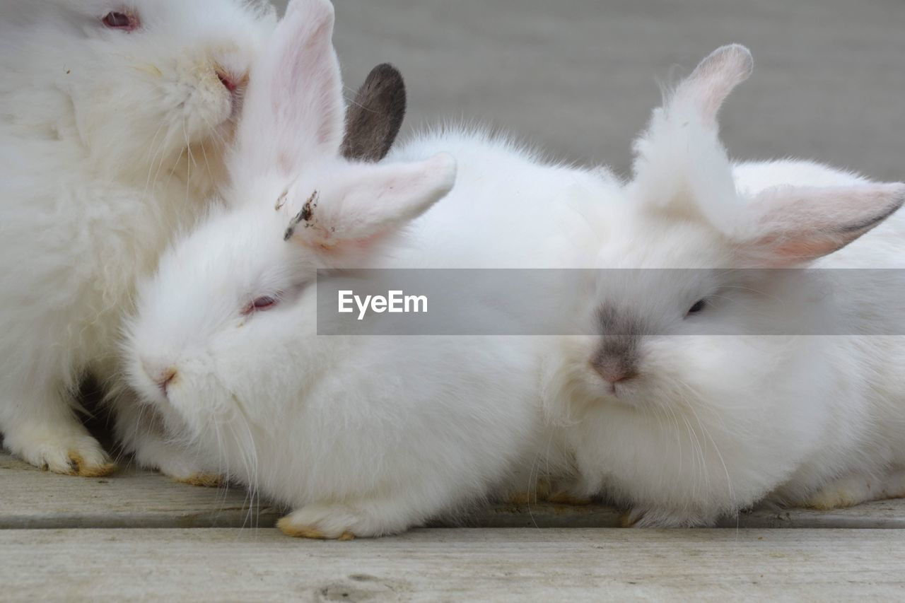 Close-up of rabbits outdoors