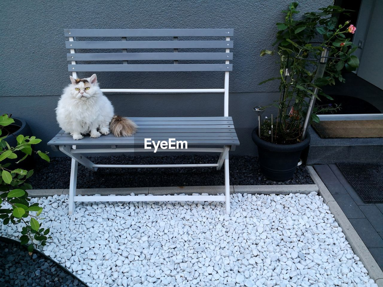 pets, domestic, mammal, animal themes, domestic animals, one animal, animal, vertebrate, cat, domestic cat, feline, dog, no people, canine, plant, day, potted plant, relaxation, nature, white color