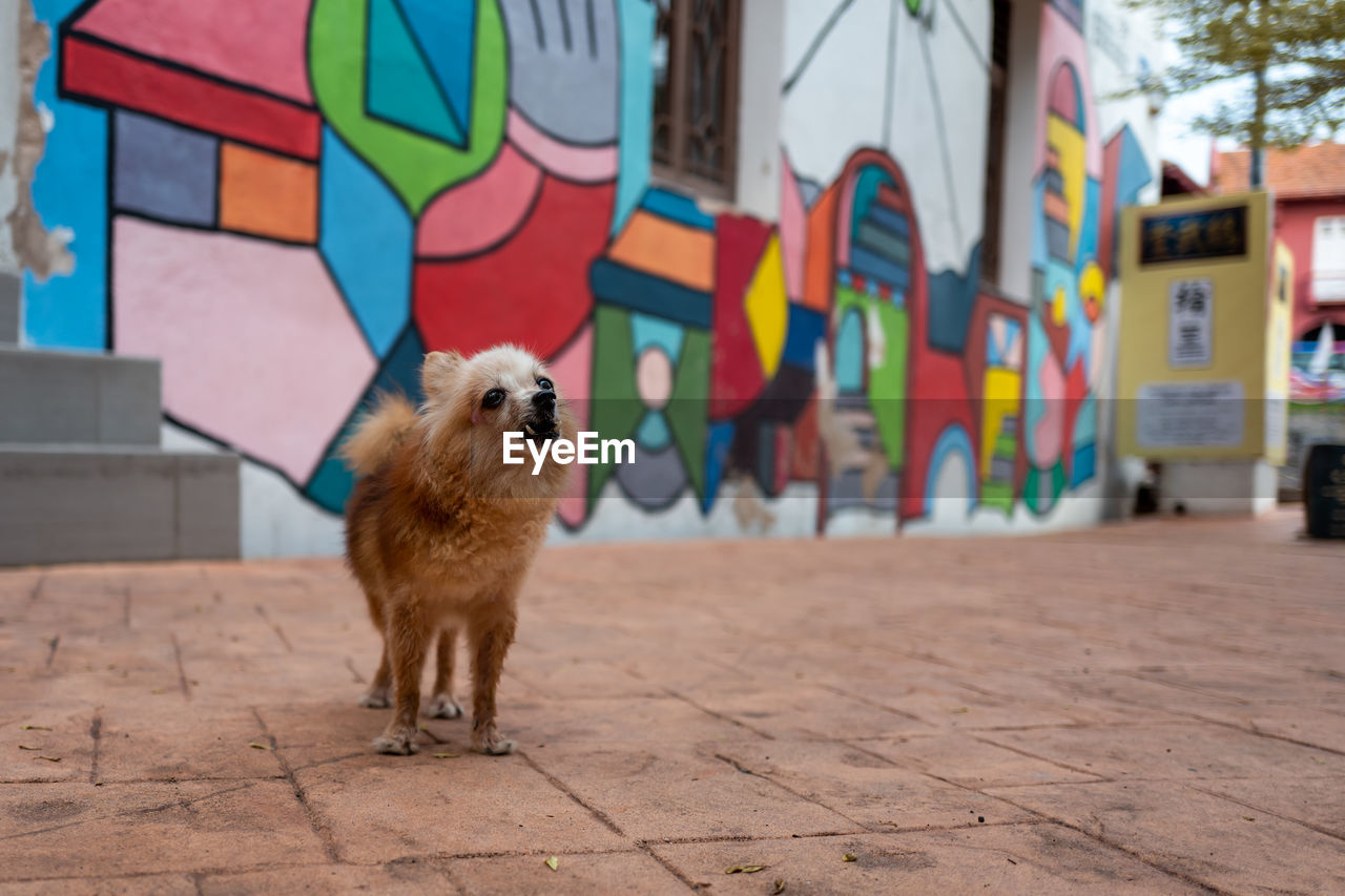 mammal, animal, animal themes, one animal, domestic animals, pets, domestic, dog, canine, vertebrate, built structure, architecture, multi colored, no people, focus on foreground, wall - building feature, day, graffiti, city, creativity