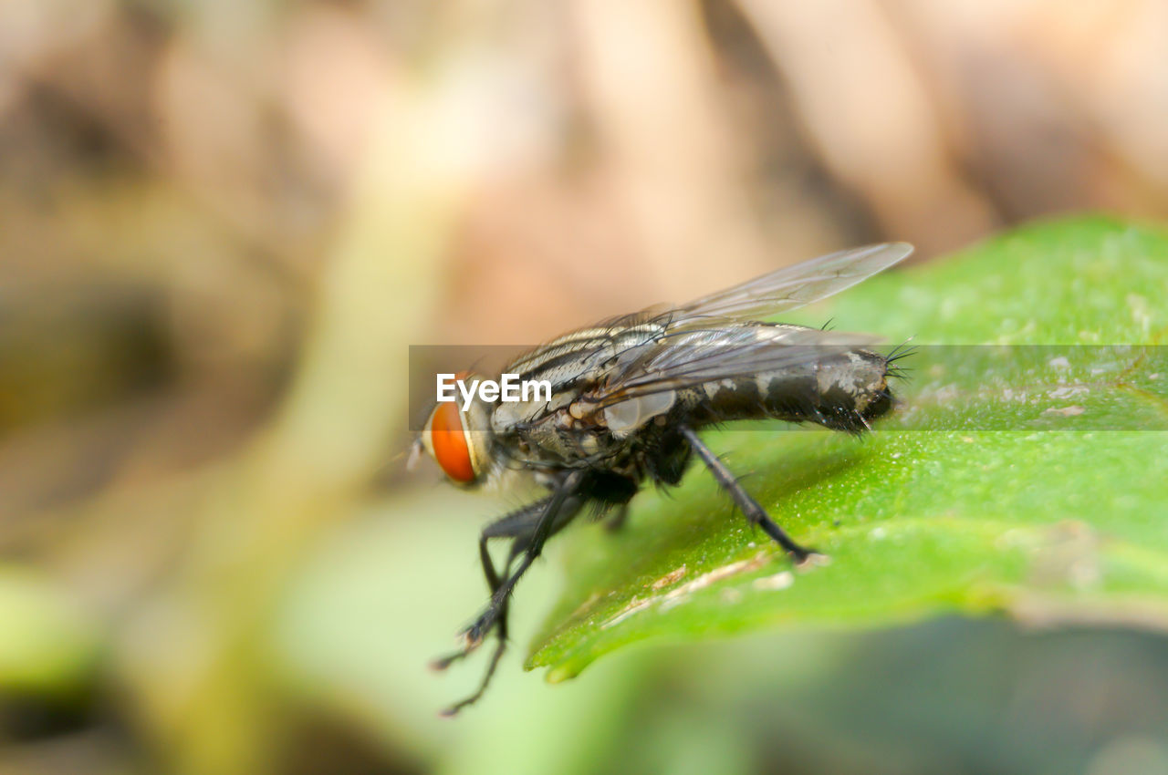invertebrate, animal themes, animals in the wild, insect, animal wildlife, animal, one animal, close-up, selective focus, day, nature, plant part, leaf, animal wing, plant, focus on foreground, no people, fly, beauty in nature, outdoors