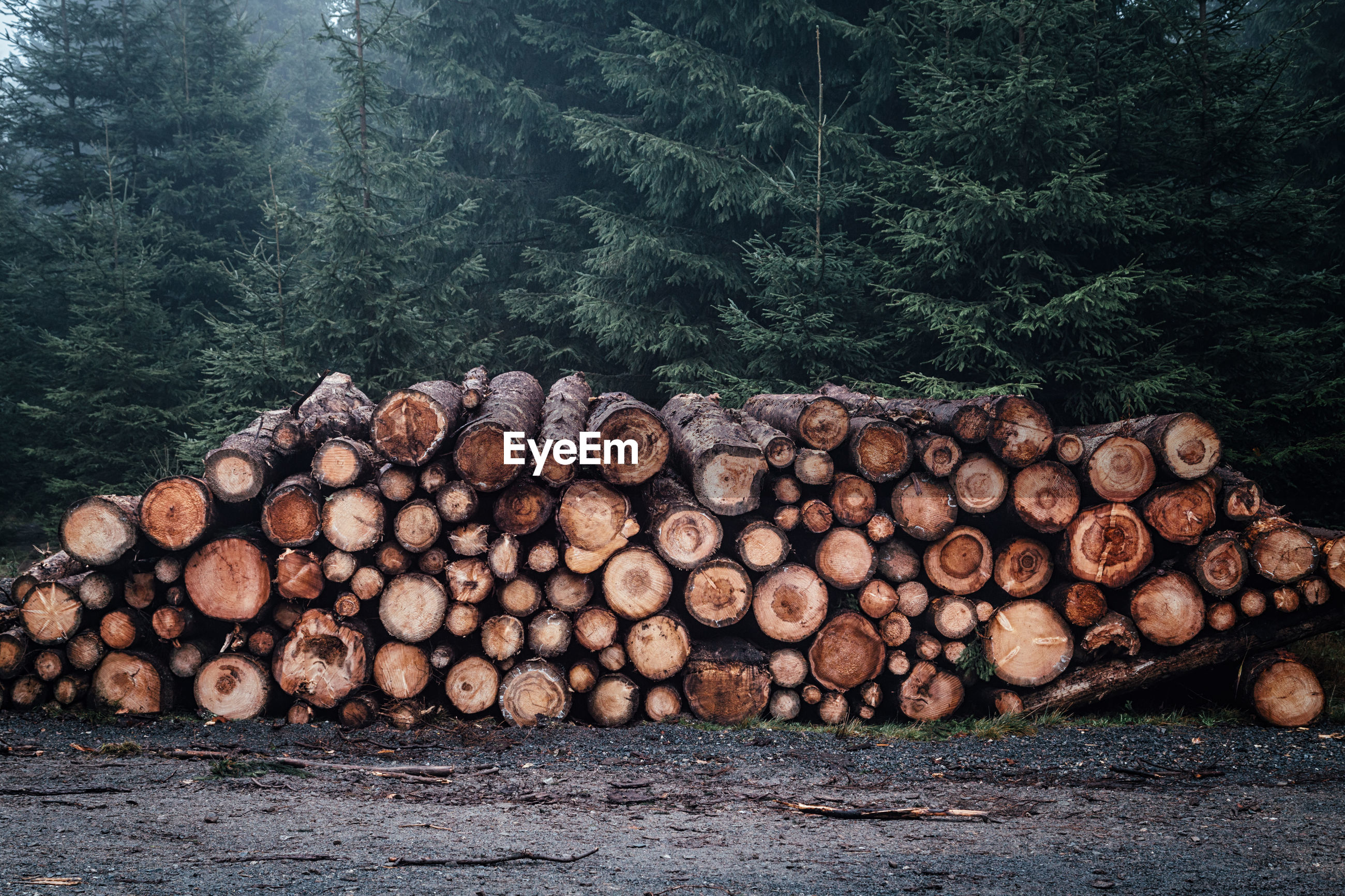 STACK OF LOGS IN TREE