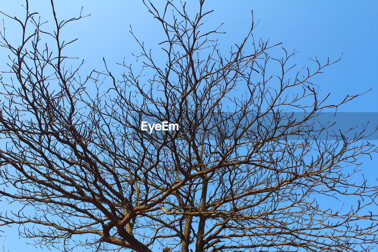 bare tree, branch, blue, nature, low angle view, clear sky, tree, beauty in nature, no people, sky, outdoors, day