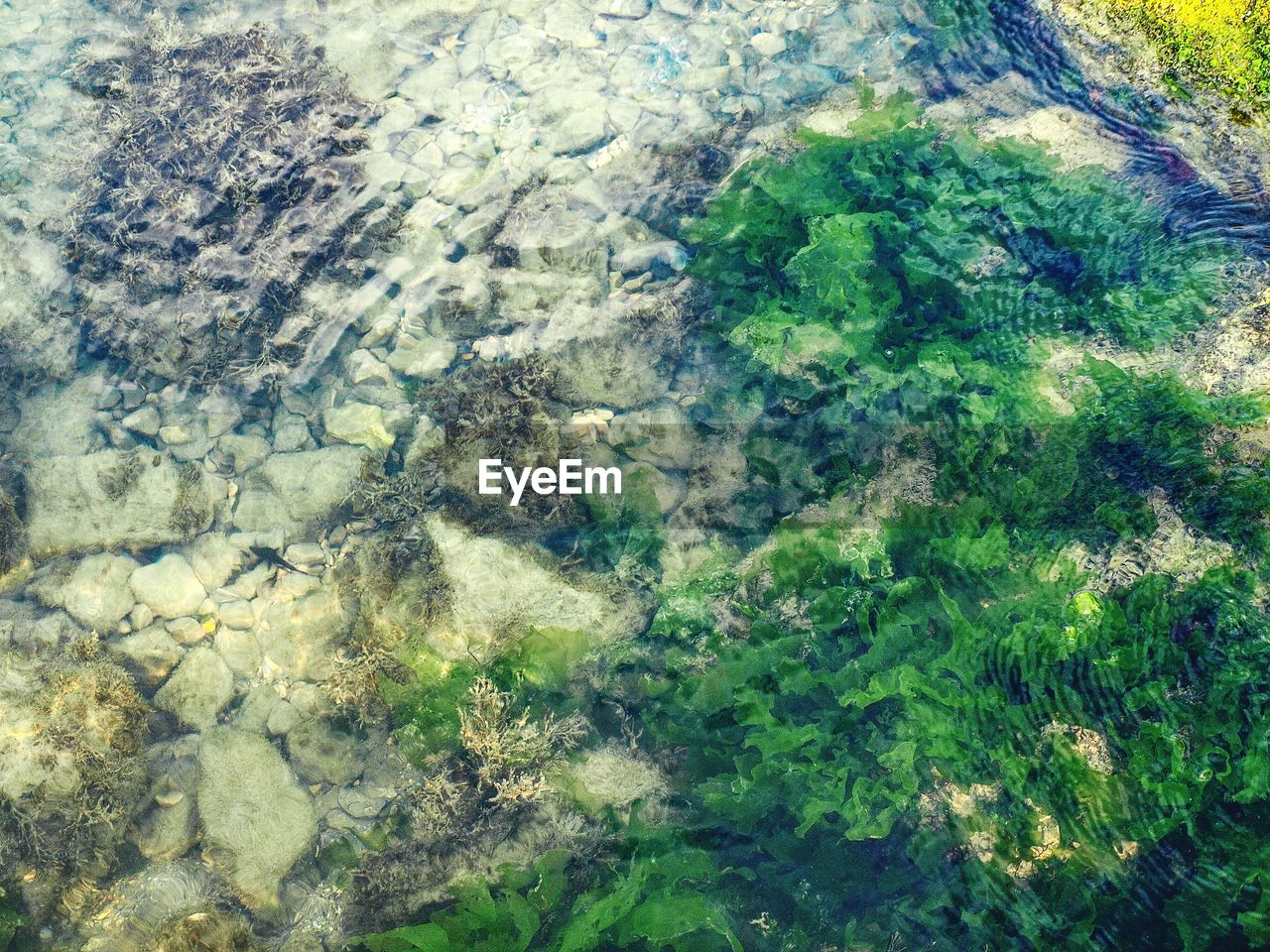 backgrounds, full frame, nature, aerial view, high angle view, green color, no people, landscape, day, growth, planet earth, outdoors, beauty in nature, water, satellite view, close-up