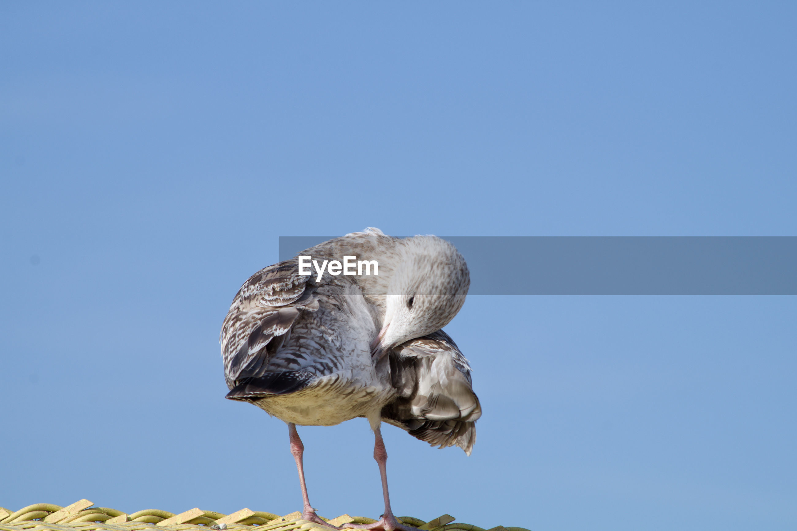 Low angle view of seagull perching on rock