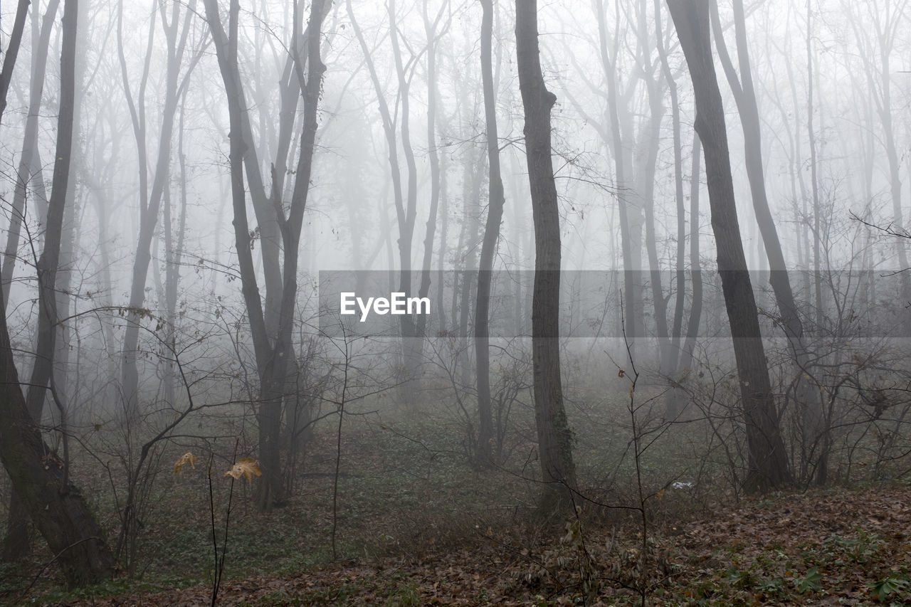 tree, forest, fog, land, plant, woodland, tranquility, trunk, tree trunk, nature, environment, tranquil scene, beauty in nature, no people, landscape, non-urban scene, day, scenics - nature, branch, outdoors, hazy