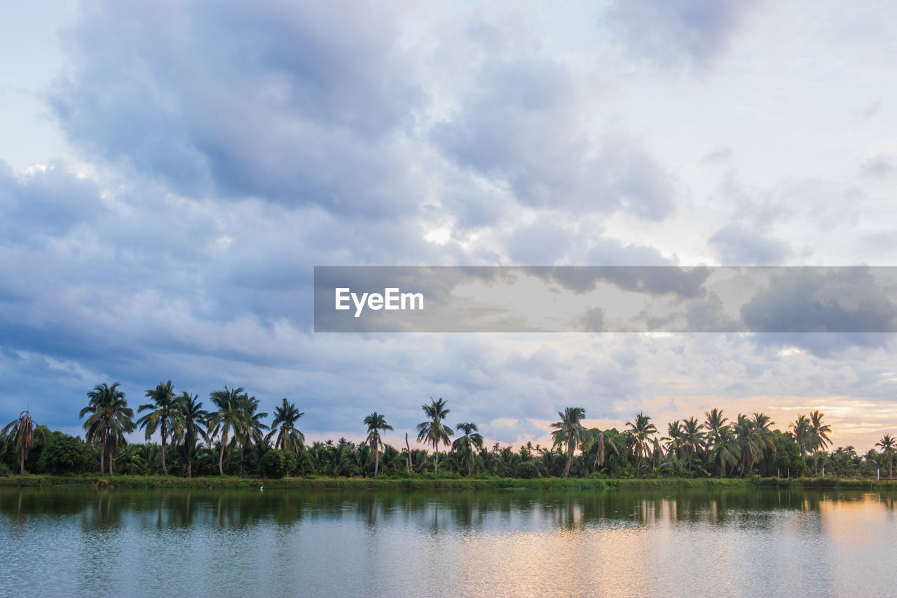 cloud - sky, sky, tree, plant, beauty in nature, water, scenics - nature, tranquility, tranquil scene, waterfront, nature, no people, palm tree, tropical climate, non-urban scene, lake, day, growth, reflection, outdoors, coconut palm tree