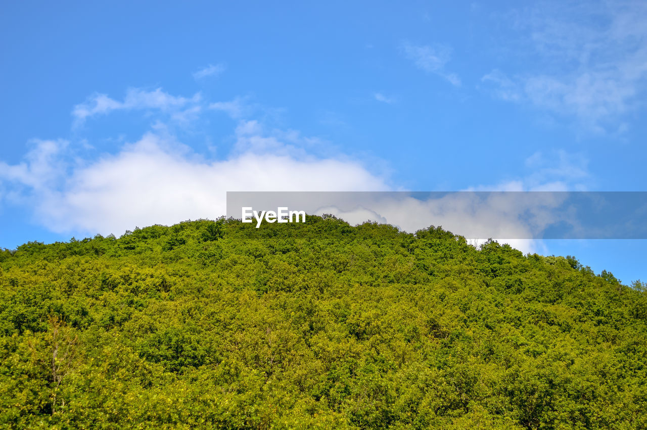 LOW ANGLE VIEW OF TREES ON LAND AGAINST SKY