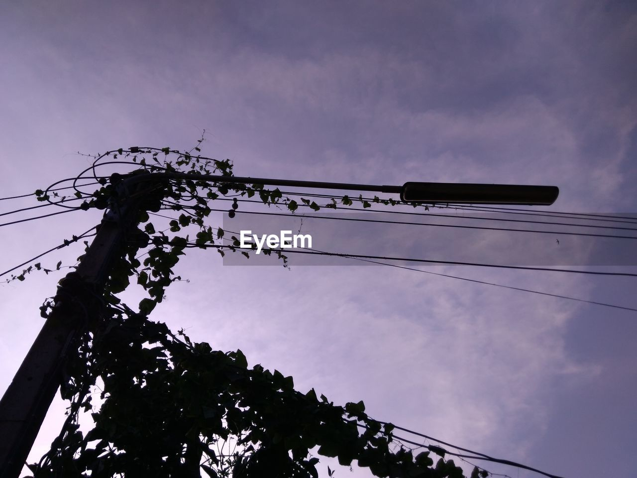 low angle view, sky, cloud - sky, tree, nature, cable, no people, electricity, silhouette, connection, power line, outdoors, day, technology, plant, power supply, fuel and power generation, perching, animal wildlife, animal, telephone line