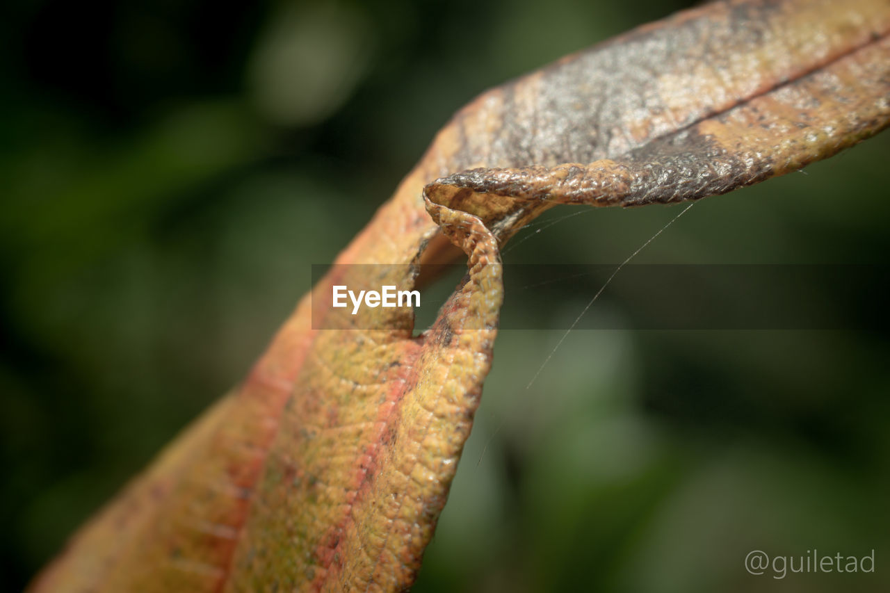 close-up, focus on foreground, nature, day, outdoors, no people, one animal, leaf, growth, beauty in nature, animal themes