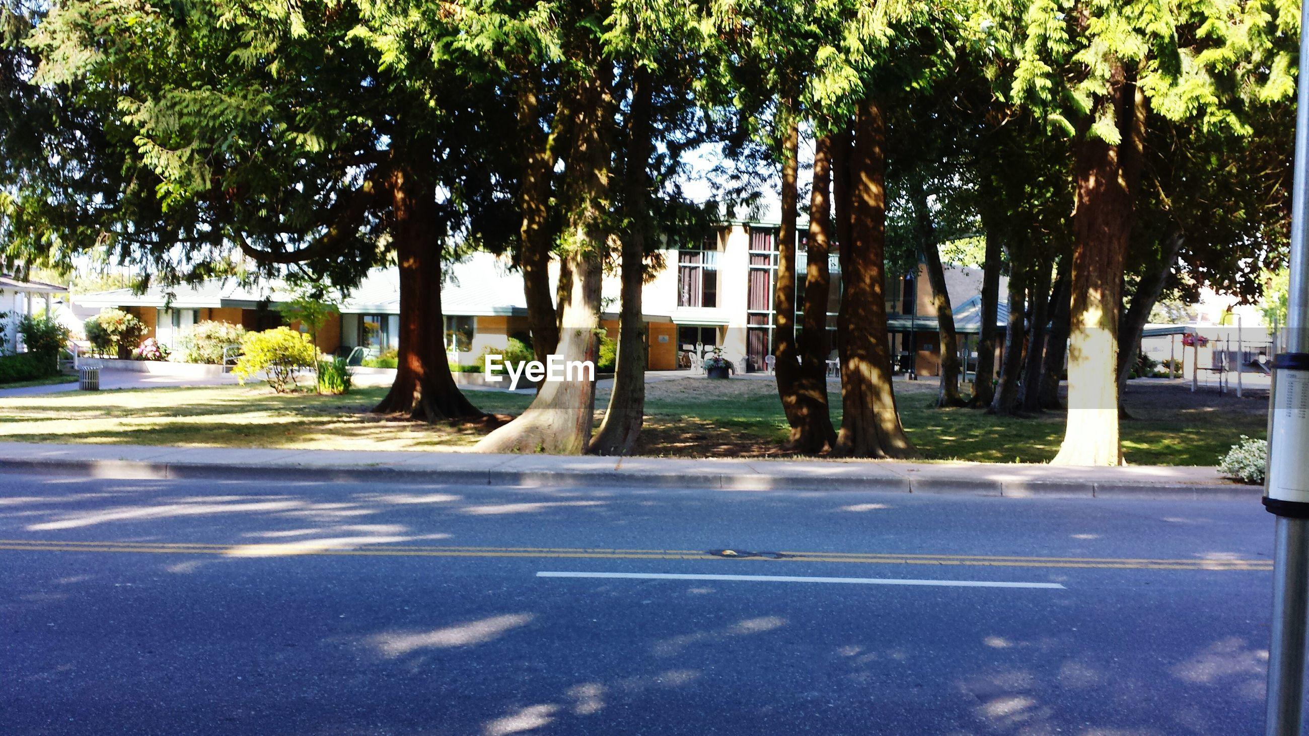 Road by trees against buildings