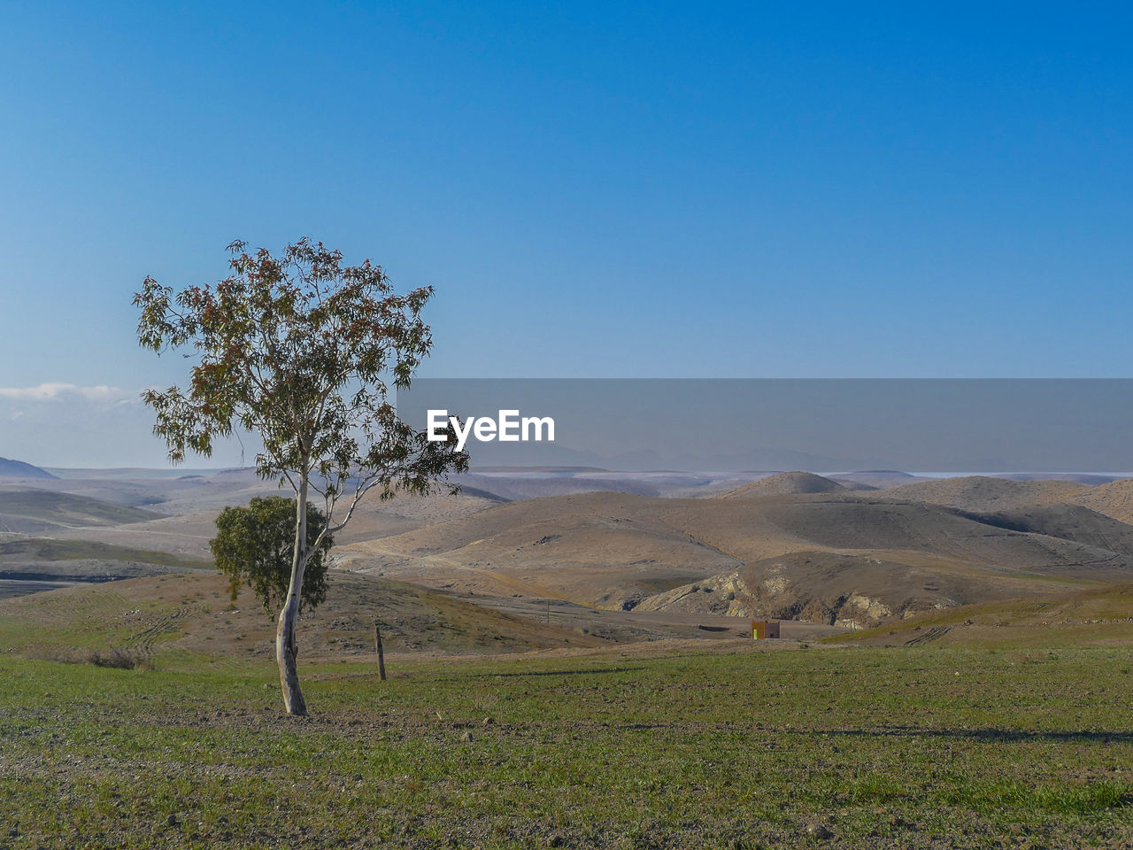 environment, sky, landscape, tranquility, tranquil scene, plant, beauty in nature, scenics - nature, land, non-urban scene, nature, tree, field, grass, blue, copy space, clear sky, no people, mountain, remote, outdoors, climate, arid climate
