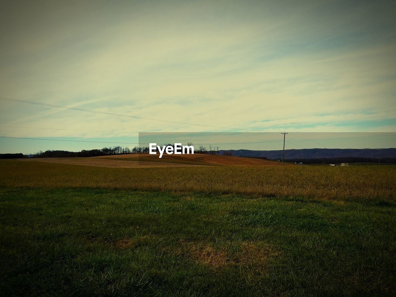 field, landscape, tranquility, nature, beauty in nature, tranquil scene, scenics, grass, sky, no people, rural scene, tree, agriculture, day, outdoors