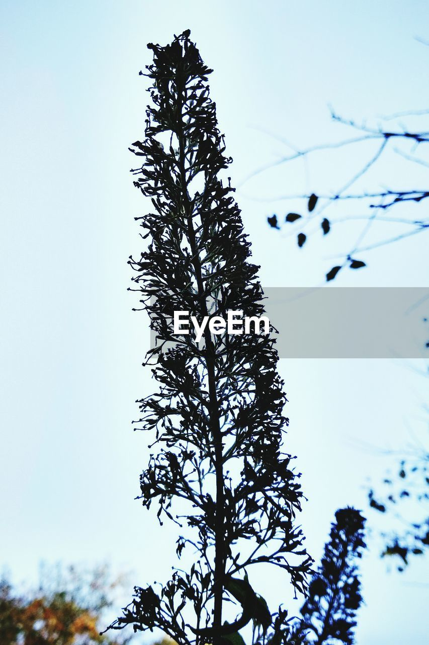 tree, low angle view, nature, clear sky, silhouette, beauty in nature, growth, no people, sky, day, branch, outdoors, flower, close-up