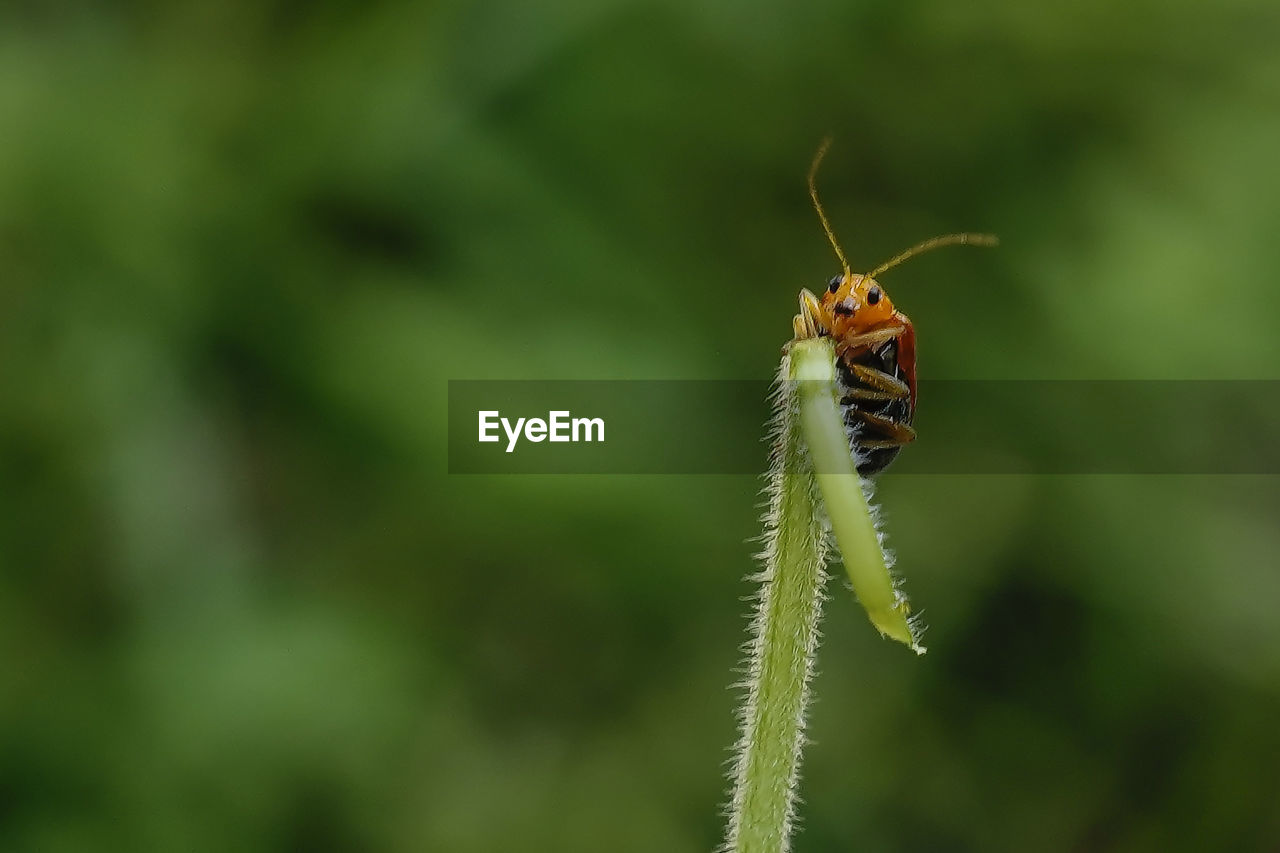 insect, animal wildlife, animals in the wild, animal themes, invertebrate, animal, one animal, close-up, green color, plant, day, selective focus, nature, focus on foreground, plant part, leaf, no people, growth, beauty in nature, outdoors