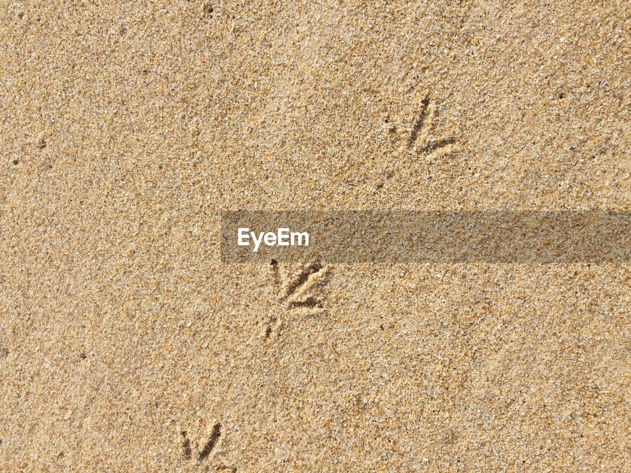 High angle view of track imprints at beach on sunny day
